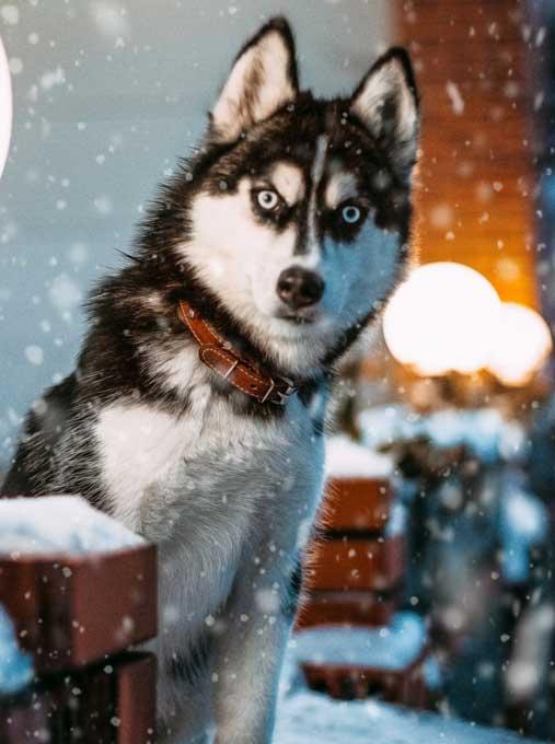 Go home, Schnee ...